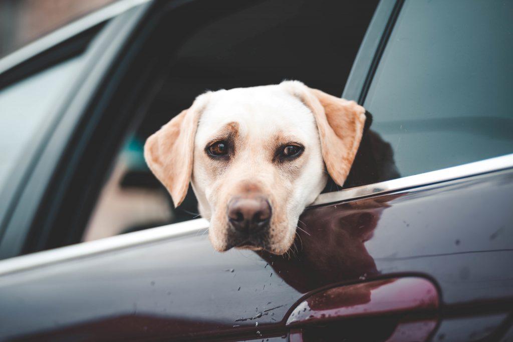 pet custody stipulation california family attorney lawyer